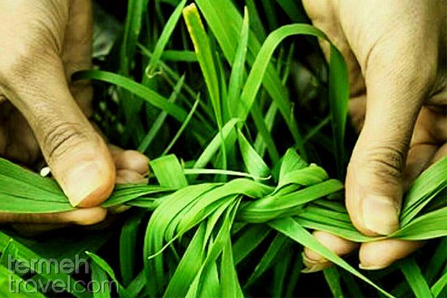 Knotting greens in Sizdah Bedar- Termeh Travel