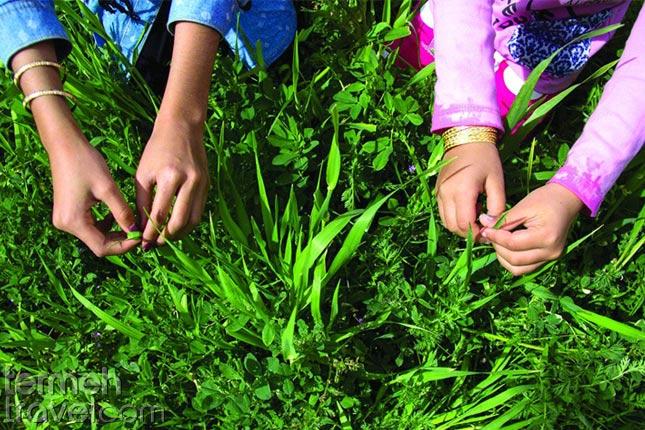 Knotting green in Sizdah bedar- Termeh Travel