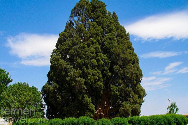 Abarkuh Ancient Cypress- Termeh Travel