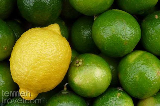 Lime-Termeh-Travel